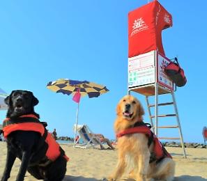 Botch, Ariel, Eva, Maggy e Thor: ecco i cani bagnino che sorvegliano le nostre vacanze al mare